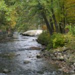 Woods, streams, tall pines, mineral springs and more